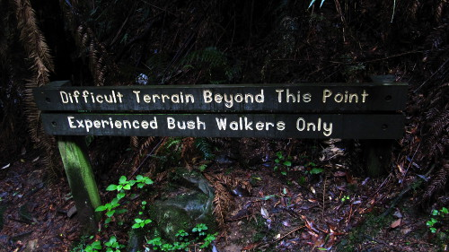 34_Bushwalk